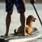 7 roliga saker att göra med din hund i sommar