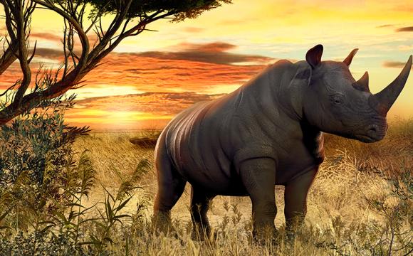 Specialtränade hundar räddar noshörningar