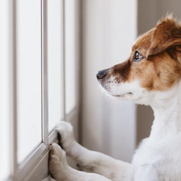 Kortet som kan rädda din hund