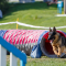 Ny hundmässa – Nordic Dog Day