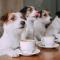 Nytt hundcafé i Falun