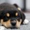 Köpa hund för första gången