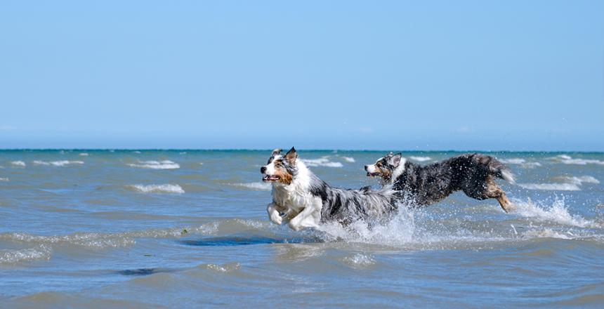 Bästa badplatserna för hunden i Sverige