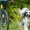 Så cyklar du med hunden