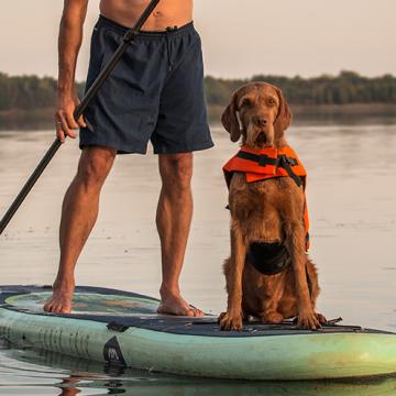 Så paddlar du ståbräda med din hund