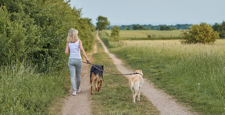 Ny lag om promenad
