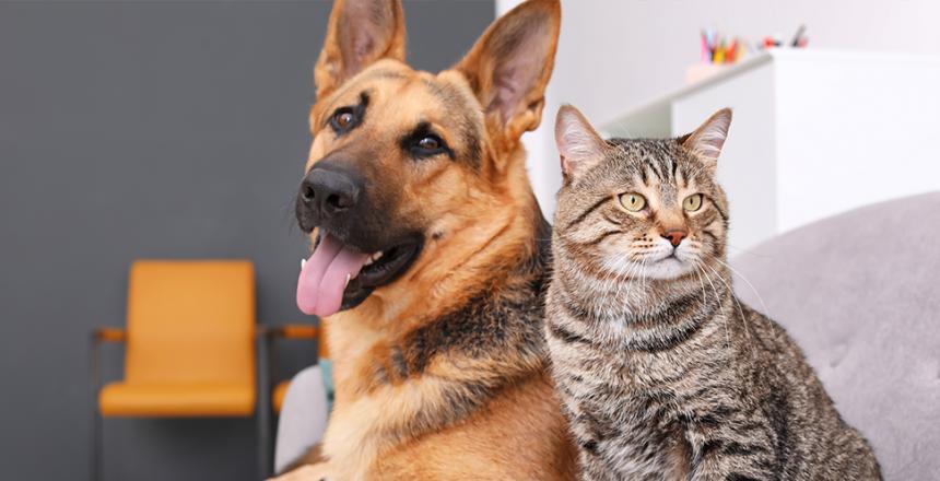 5 myter om hundar