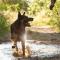 5 september – Triathlon med hund