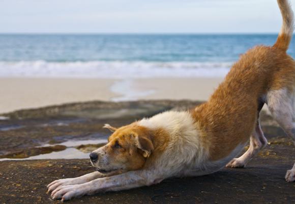 Testa doga med din hund