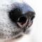 Tyska spårhundar upptäcker coronavirus