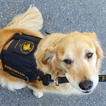 Stor efterfrågan på assistanshundar