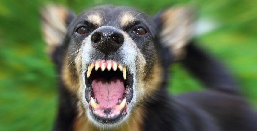 Så undviker du hundslagsmål