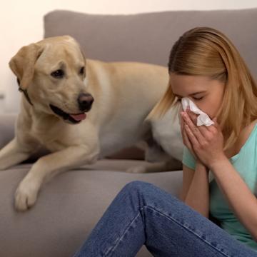 Husdjur kan smittas av covid