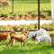 4 tips för en lyckad vistelse i rastgården