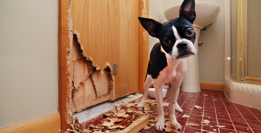 Hemförsäkringen täcker inte djurskador