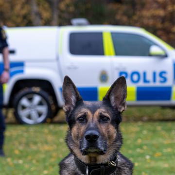 Izor – Årets polishund