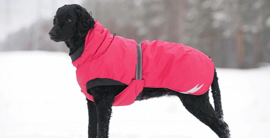 Så skyddar du din hund i vinterkylan