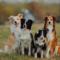 Nordic Dog Days skänker hundrastgård till Umeå