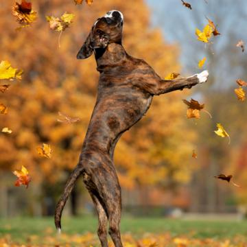 Miljondonation till hundcancerforskning