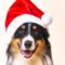 Så firar du en hundsäker jul
