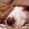 Nyårstips för skotträdda hundar