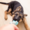 5 bra tips för att uppfostra din hund