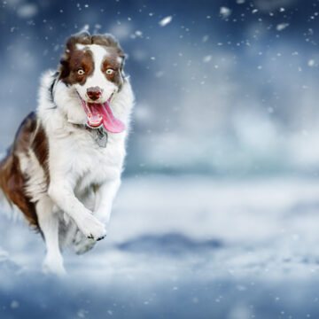 Miljoner till hundforskningen