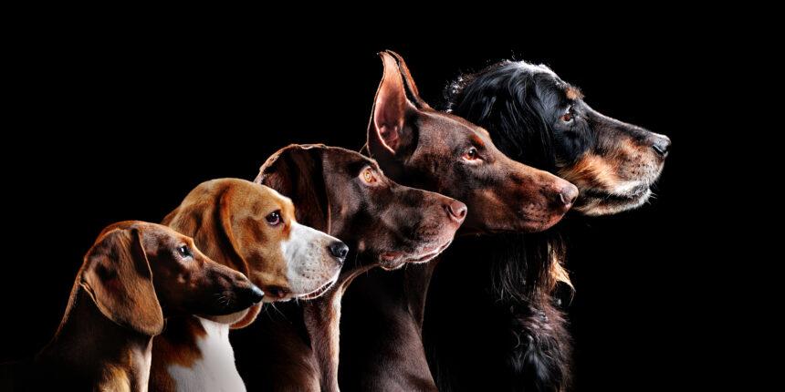 Stora prisskillnader på djurförsäkringar