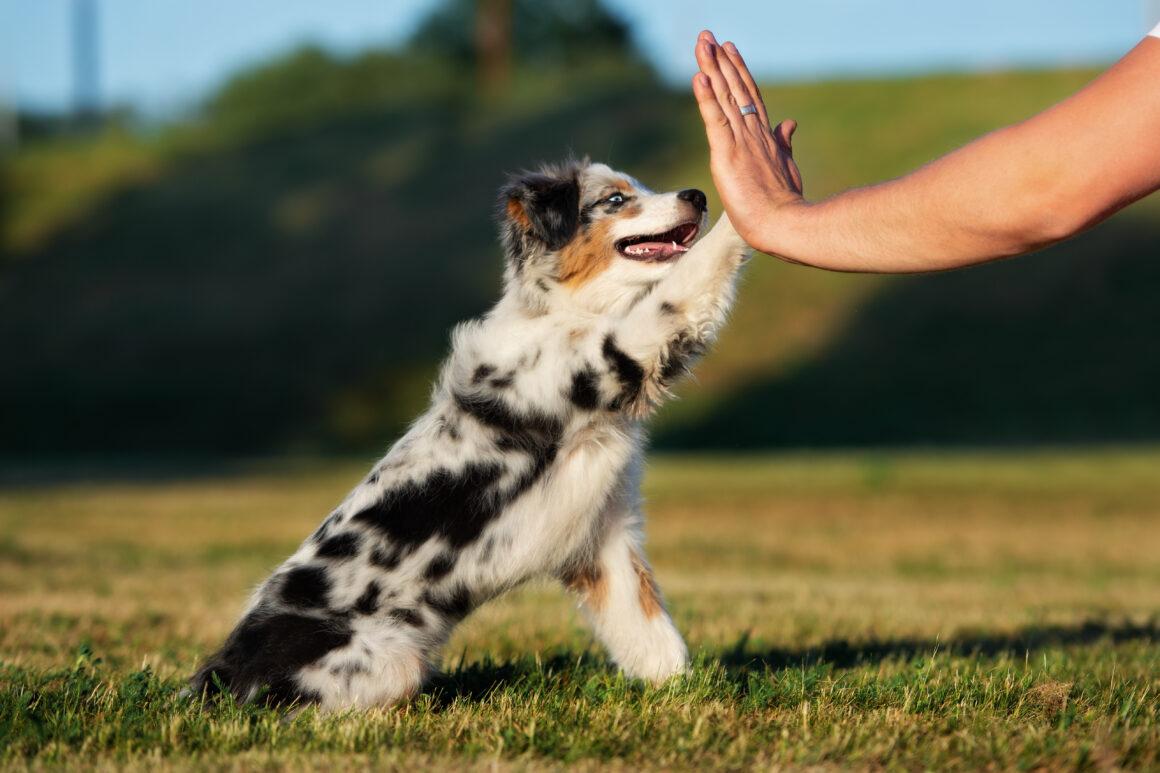 Att leva med hund – relationer, känslor, kommunikation