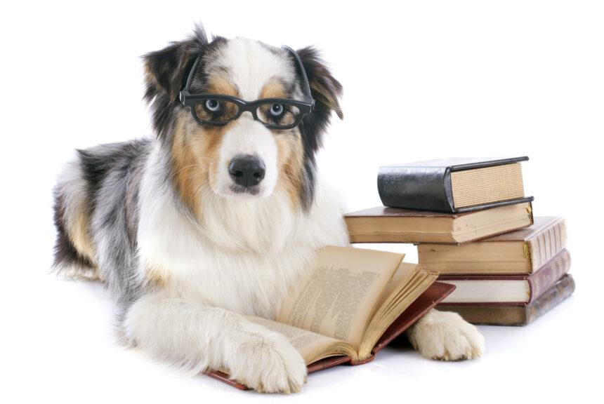 Ny utbildning i djurpsykologi