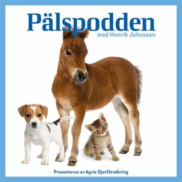 Pälspodden – om hundars personlighet