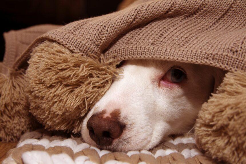 Är din hund rädd för ljud?