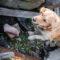 Hundresurs Sundsvall hittar försvunna personer