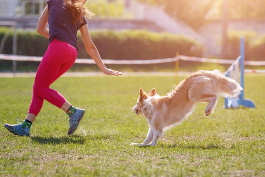 Hundungdom får pengar till nya hinder