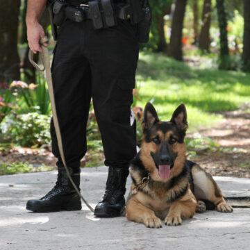Polisen söker brukshundar