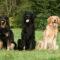 Allt fler ger antidepp till husdjur