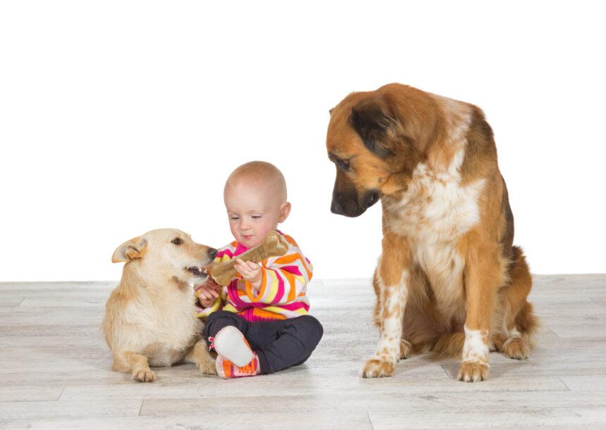 Hundar kan också bli svartsjuka
