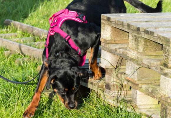 15 hundägare fick Svedeas stipendium