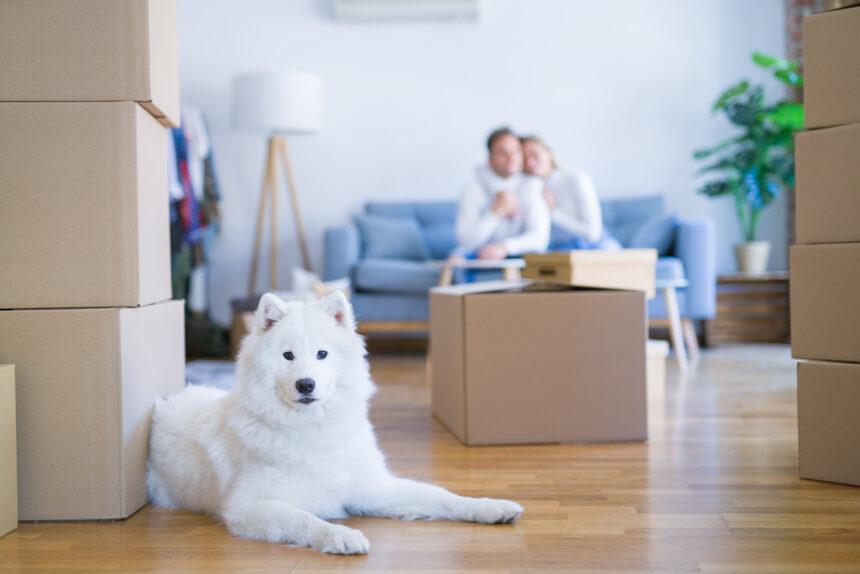 VOHV visar vägen till hundvänlig bostad