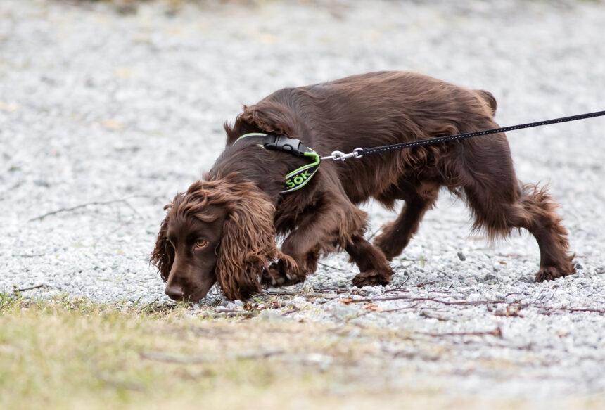Bruno söker efter vattenläckor