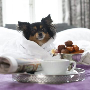 Bo på hundvänligt hotell i sommar
