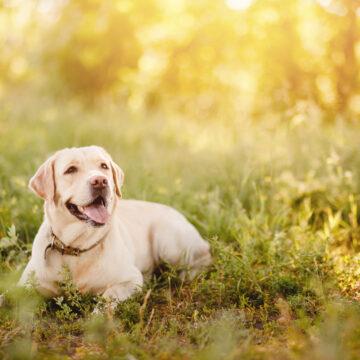 Har du en labrador som heter Molly?