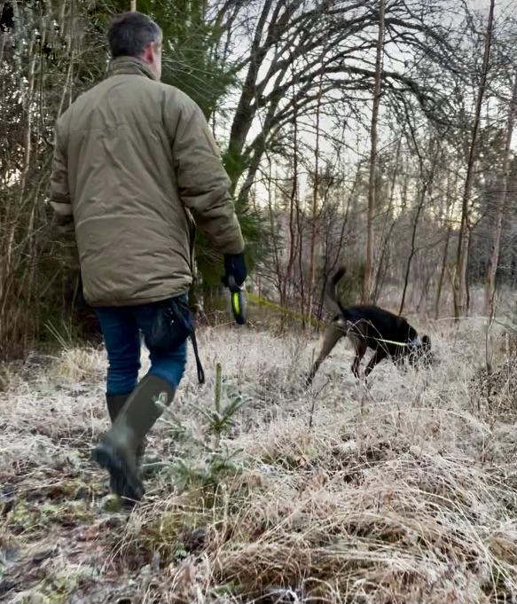 Hundar letar markföroreningar