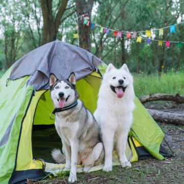 Semestra med hunden