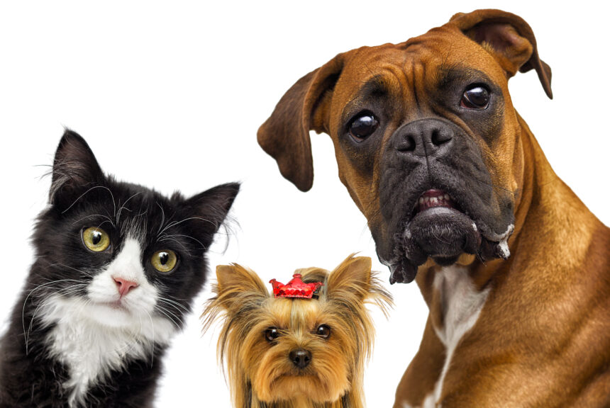 2288 – Djurens vårdguide