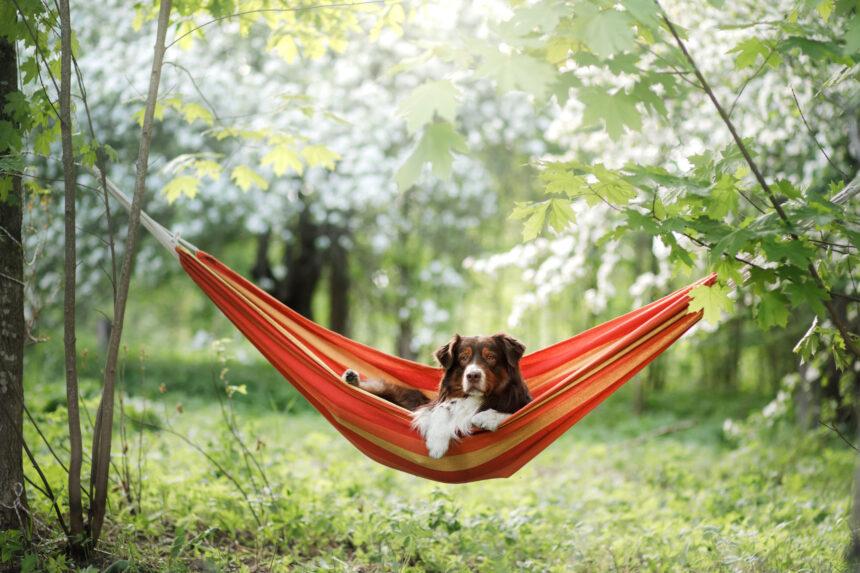 Hunden styr semestern