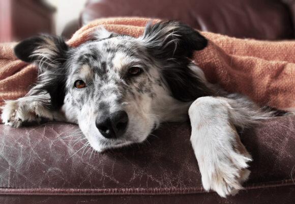 Sommarens veterinärbrist kan ge stora konsekvenser