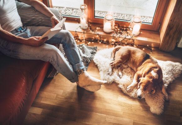Snygg inredning även till hunden