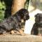 Ny studie visar att hundar är självmedvetna