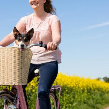 Cykelkorg eller cykelvagn?